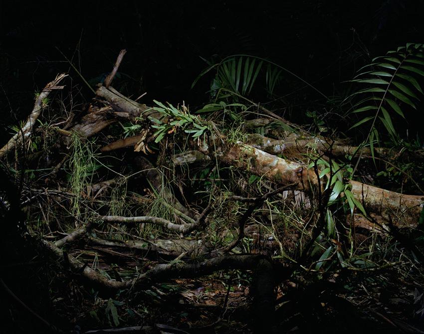 Tree_death1