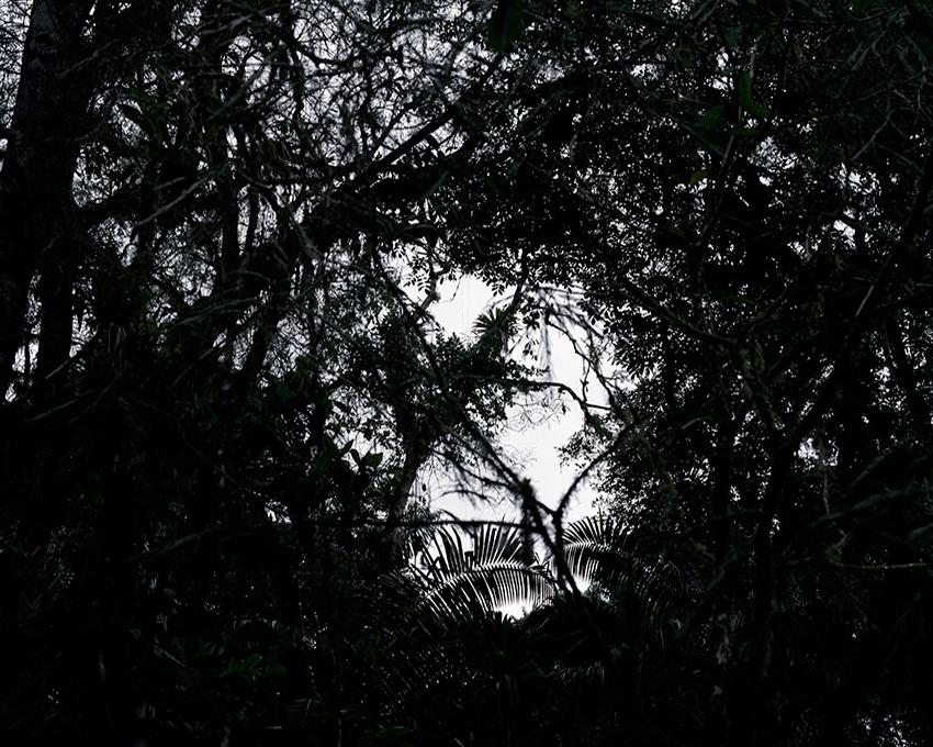 Dark_Forest2