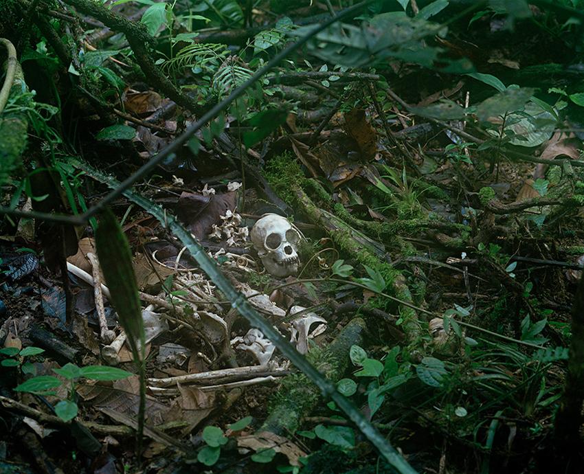 Monkey_bones