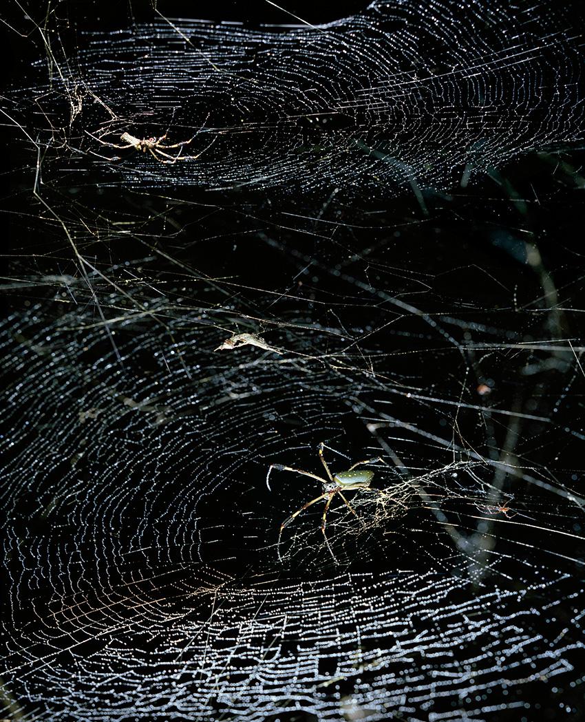 Spider_NEW
