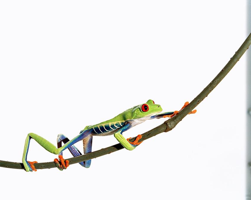 frog_studies_2