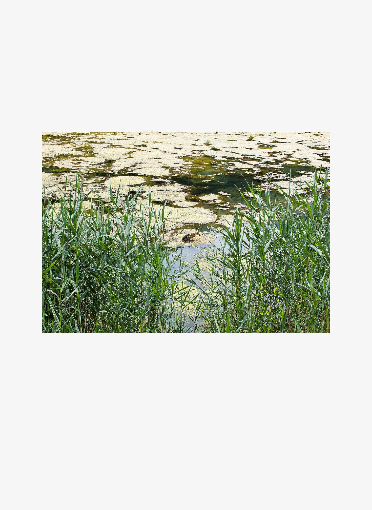 Eutrophicated_lake_kollaasi