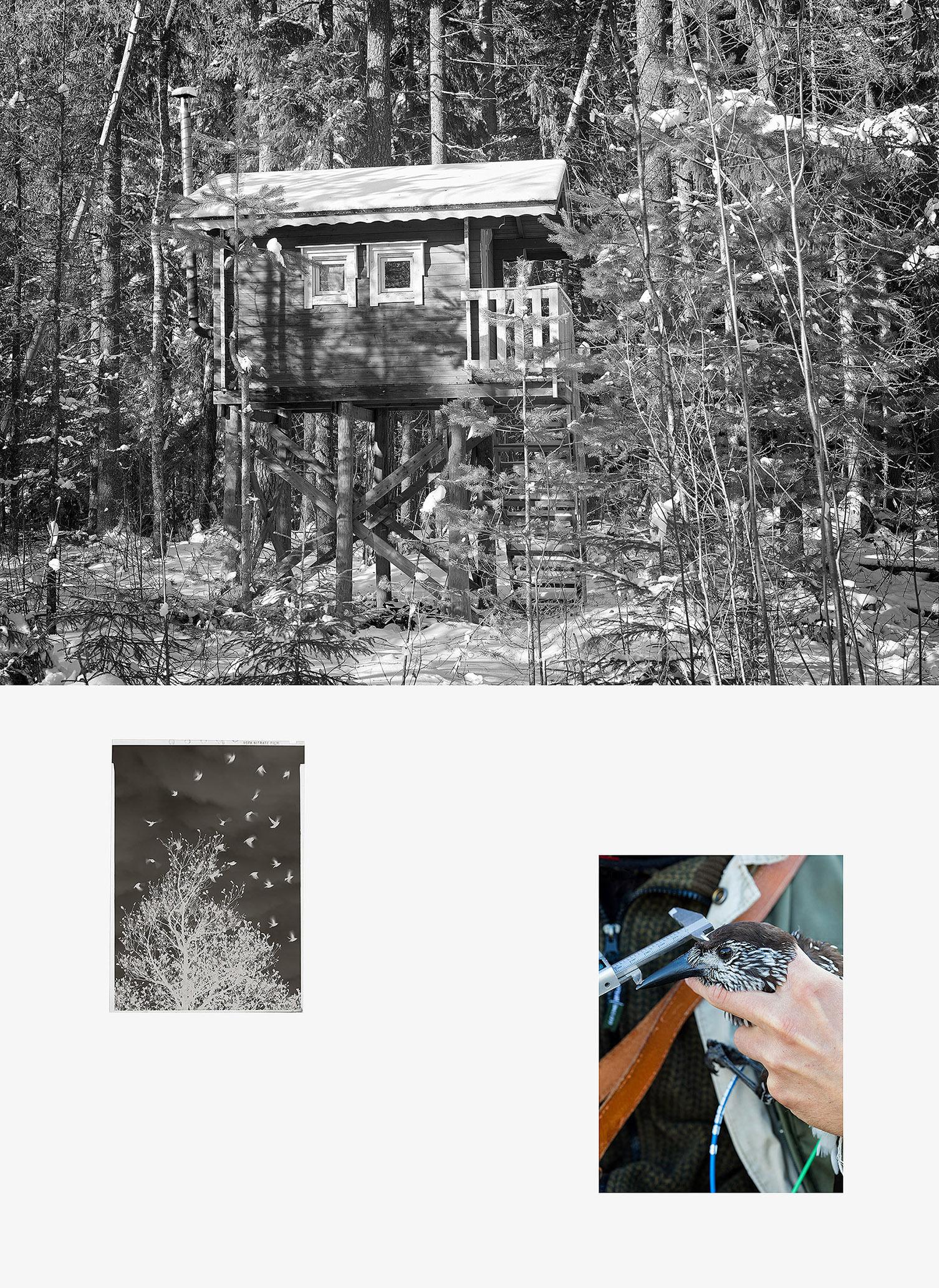 Forest-hide_kollaasi
