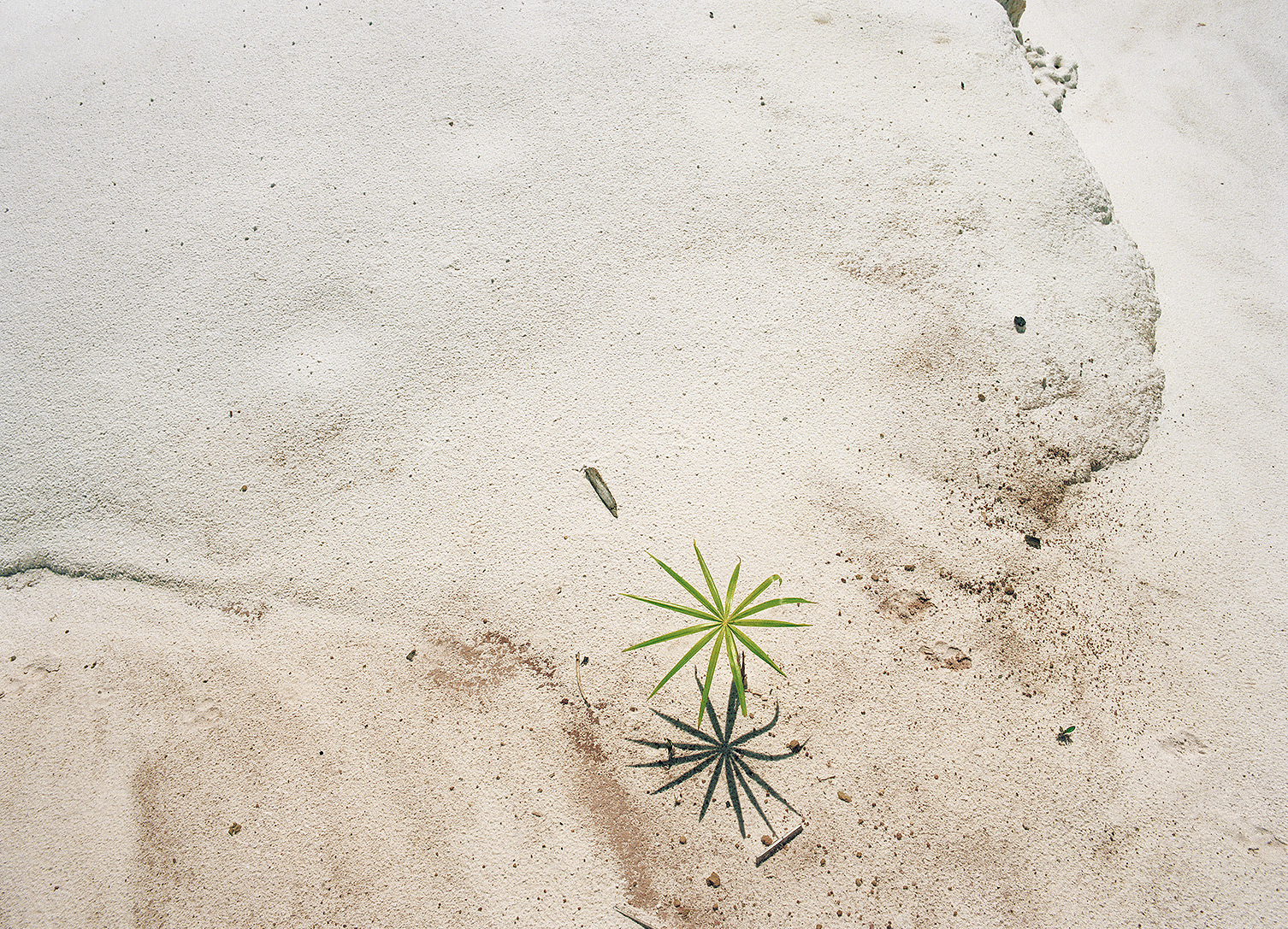 Palm-Seedling-on-Deforestation-area