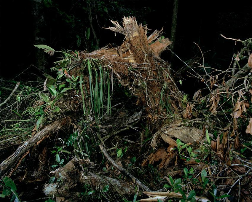 Tree_death2