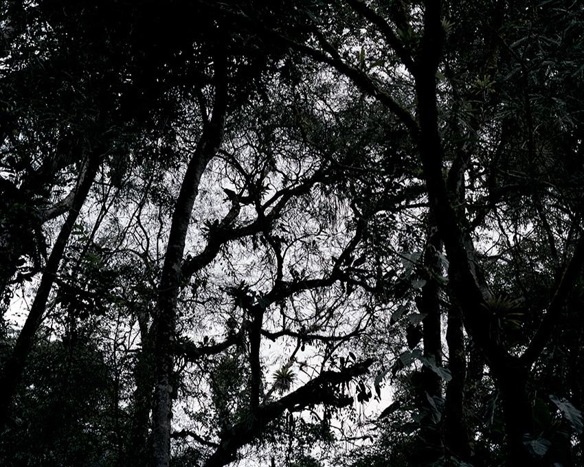 Dark_Forest1