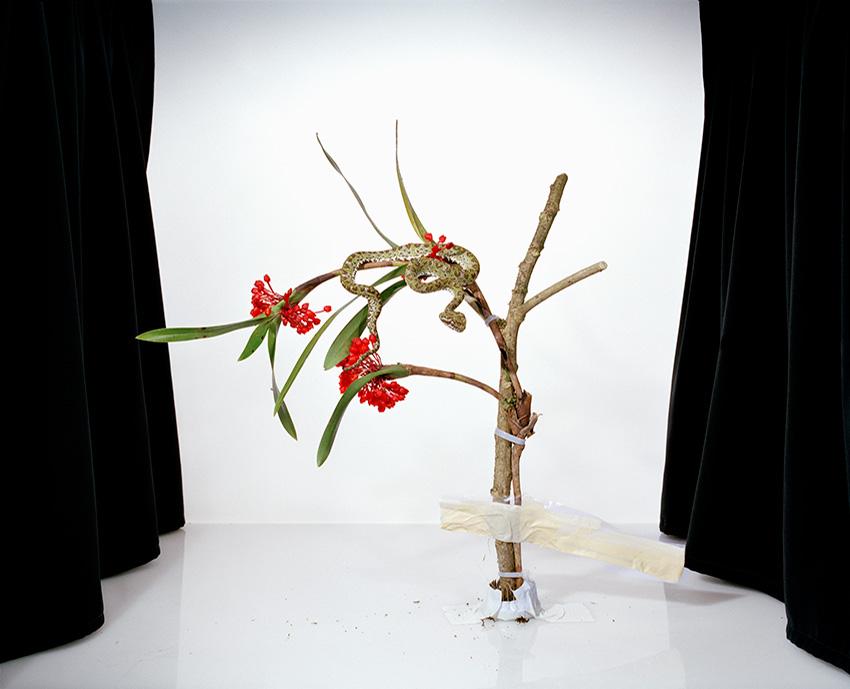 Maxillaria_new