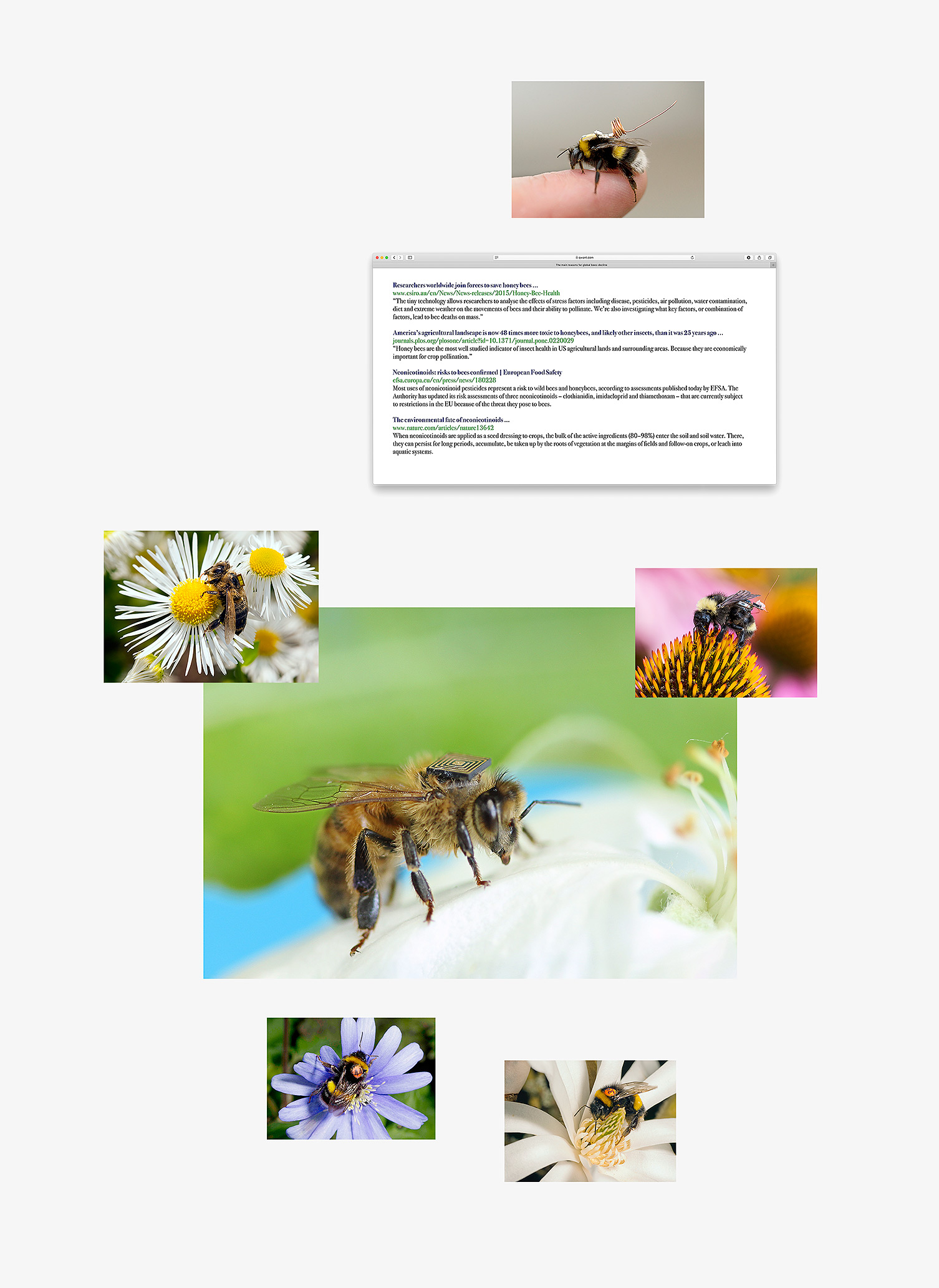 tracking_bees